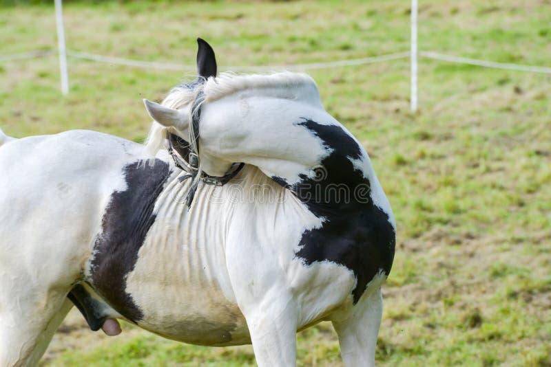 Les chevaux de cirque de carnaval errent dans le jardin photographie stock libre de droits