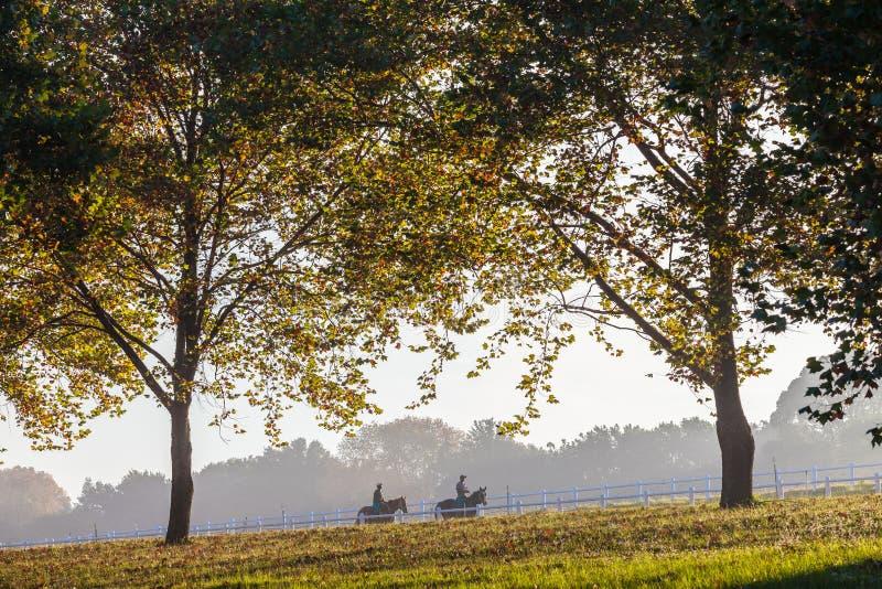Les chevaux de course toilette le paysage deux scénique photographie stock