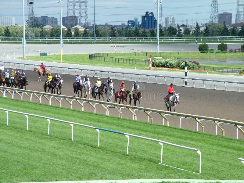 Les chevaux de pur sang se préparent à une course au champ de courses de chèvrefeuille image libre de droits