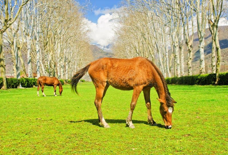 Les chevaux images stock