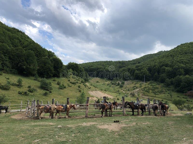 Les chevaux préparent pour le tour de cheval de montagne photos stock