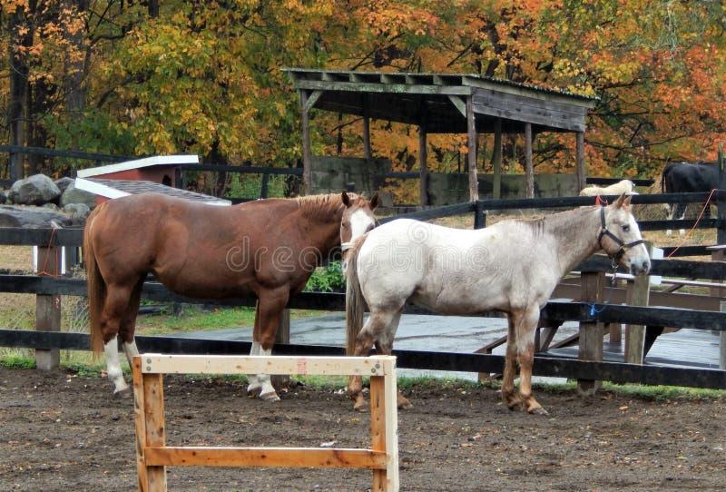 Les chevaux tout ont fatigué  images stock