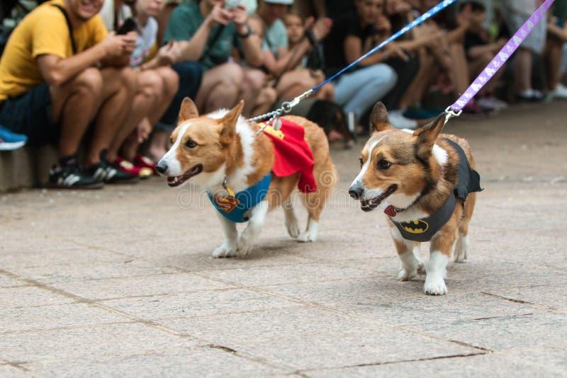 Les chiens de corgi utilisent des costumes de super héros à l'événement d'escroc de chienchien d'Atlanta photo libre de droits