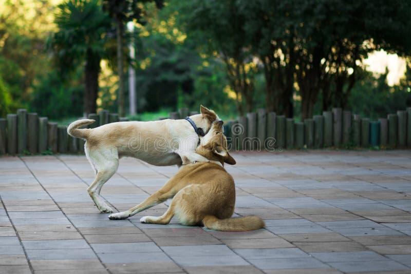 Les chiens de rue jouent les uns avec les autres, la nouvelle photo 2018 photos libres de droits