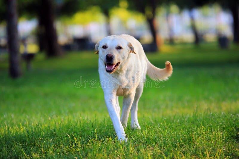 Les chiens de rue vaguent chien jouant en parc photo libre de droits