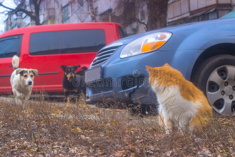 Les chiens recherchent le chat se reposant dans la cour, chassant alors image stock