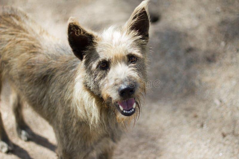 Les chiens sauvages se tenant sur la rue veut l'alimentation des personnes photo libre de droits