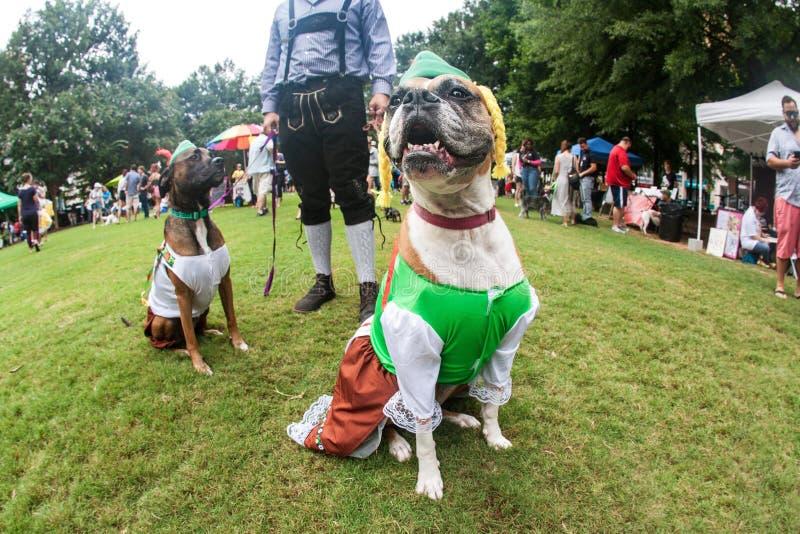 Les chiens utilisent les costumes bavarois drôles à l'événement d'escroc de chienchien d'Atlanta photos libres de droits