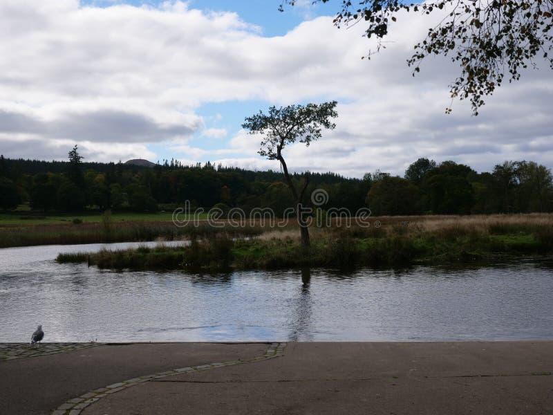 Les cieux bleus de loch écossais aménagent en parc image libre de droits