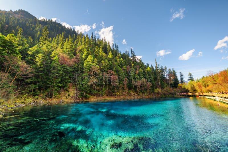 Les cinq ont coloré la piscine avec de l'eau azuré parmi des bois d'automne image stock