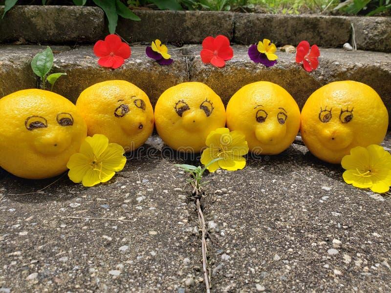 Les citrons heureux sourient pour la caméra tandis que des vacances ensoleillées photos stock