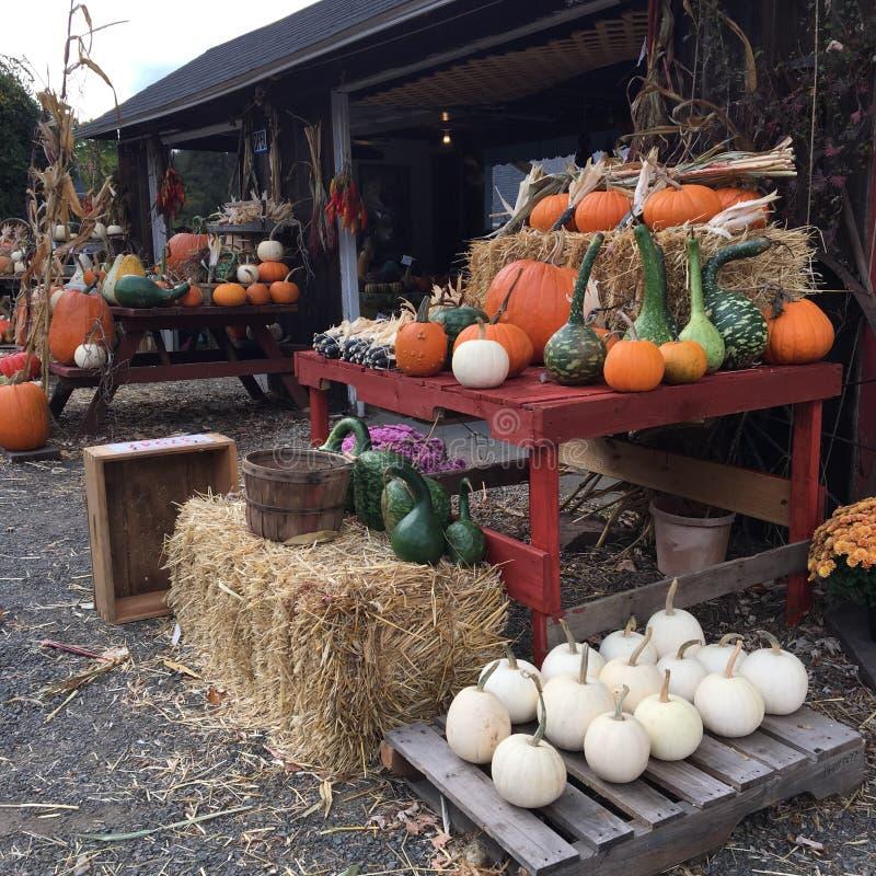Les citrouilles sur le stand de la ferme au bord de la route photos stock