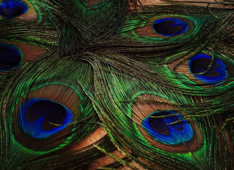 Les clavettes de paon photos libres de droits