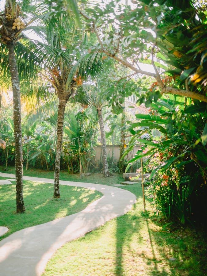 Les cocotiers et les usines tropicaux dans Bali au lever de soleil s'allument image libre de droits