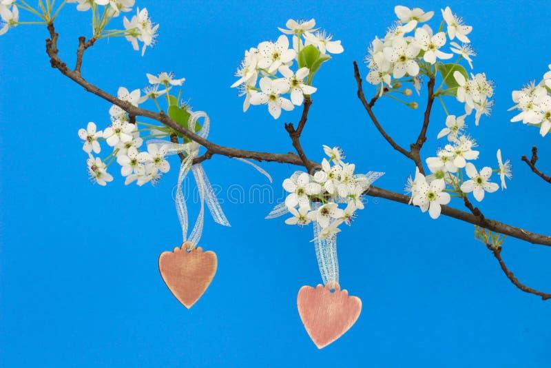 Les coeurs en bois roses pendant du poirier s'embranchent avec des fleurs image libre de droits