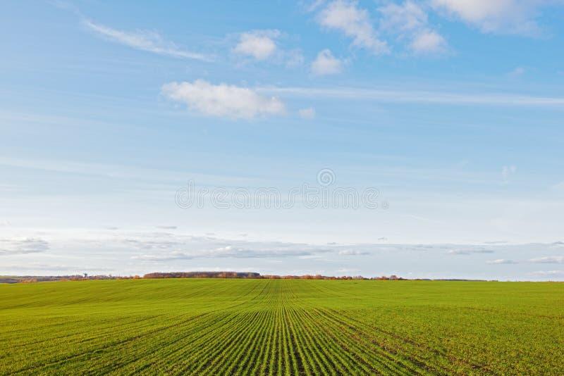 Les collectes de texture de l'hiver verdissent le ciel bleu de zone et de nuages photo stock