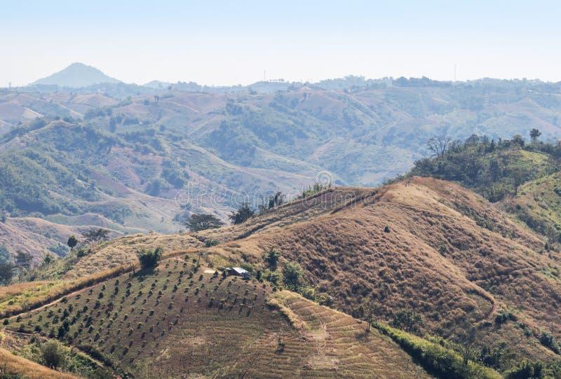 Les collines de la forêt tropicale avec le déboisement pour cultiver chez Khao Kho, province de Phetchabun, Thaïlande image stock