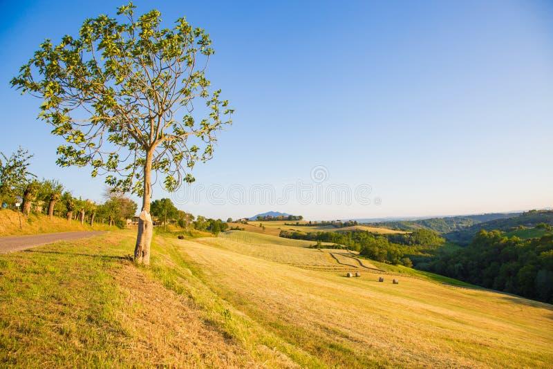 Les collines de Magliano Sabina Le Latium L'Italie photo libre de droits