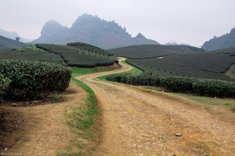 Les collines de thé, Moc Chau, Son La image stock