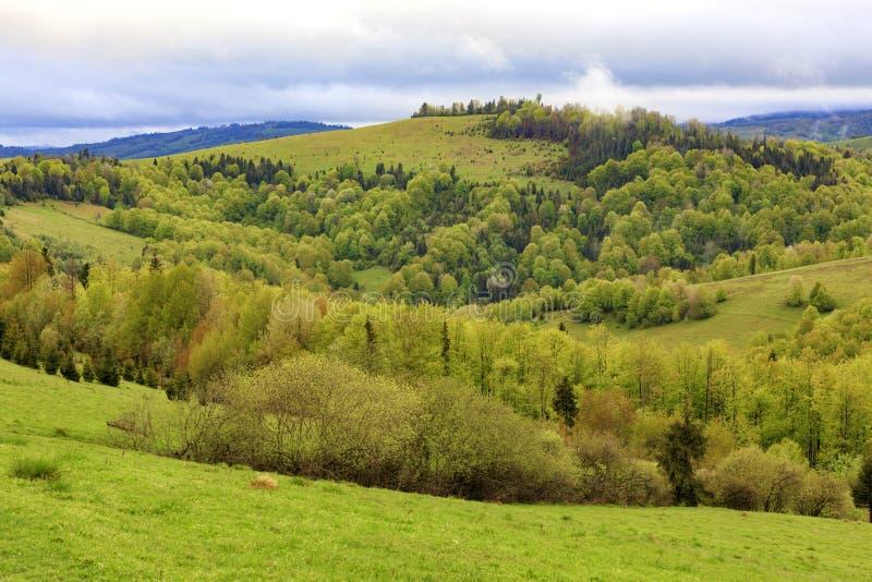 Les collines des montagnes carpathiennes sont envahies avec les jeunes arbres à feuilles caduques, la vue du ressort Carpathiens  photo stock