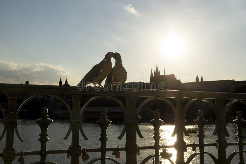 Les colombes s'embrassent sur la balustrade photos stock