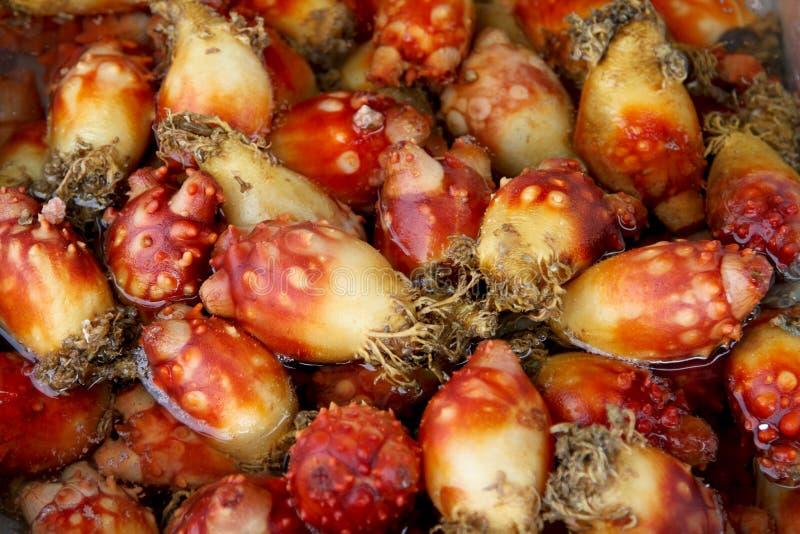 Les concombres de mer frais pour mangent image stock