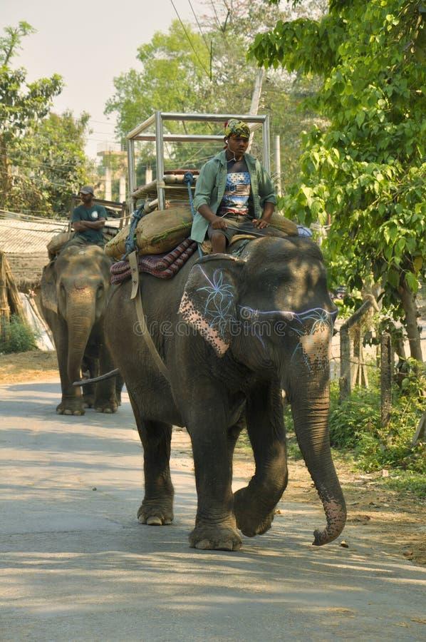 Les conducteurs d'éléphant image libre de droits