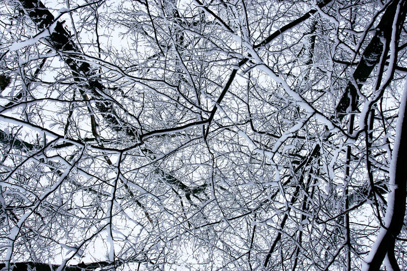 Les configurations de forêt de neige photographie stock libre de droits