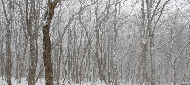 Les configurations fantastiques de la neige ont couvert des arbres photos libres de droits