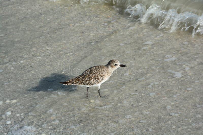 Les coquillages, l'oiseau et l'océan sur une Floride échouent image libre de droits