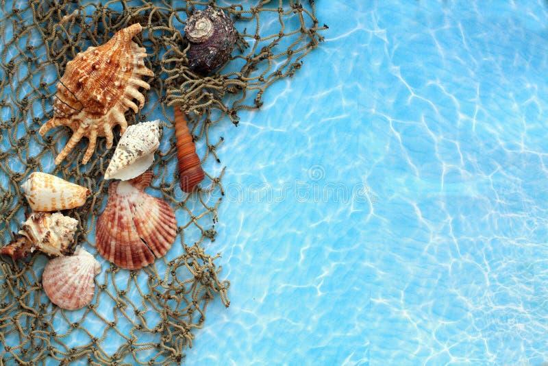 Les coquillages sur les filets de pêche en haut photos stock
