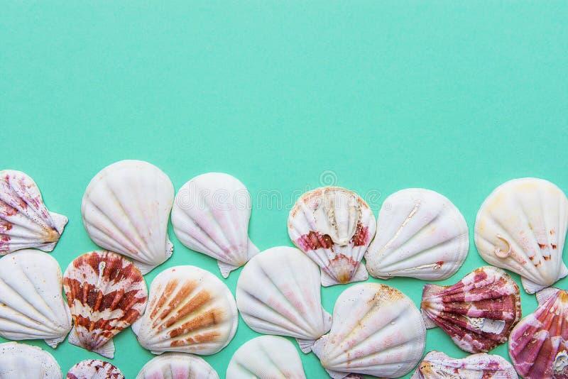 Les coquilles brunes roses blanches plates de mer ont arrangé dans le cadre de frontière sur le fond de pastel de turquoise Copie photos libres de droits