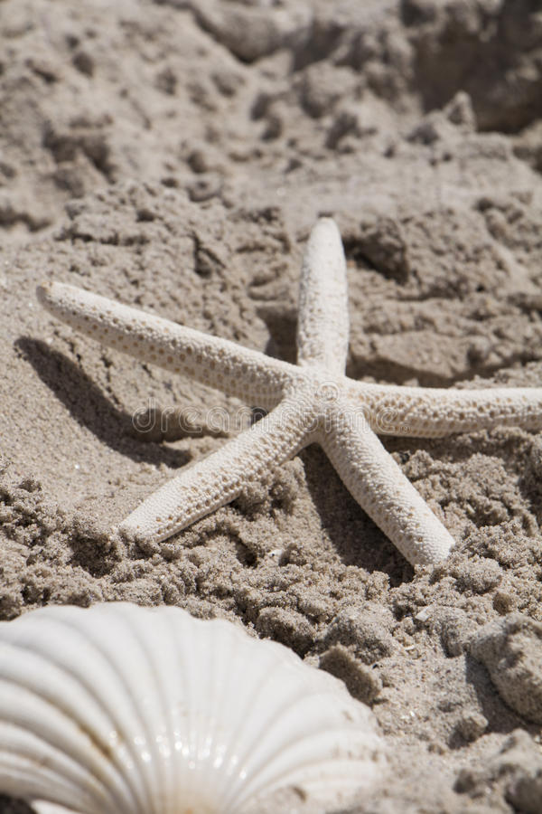 Les coquilles de feston d'étoiles de mer échouent des vacances d'été de sable de mer de coquille photos libres de droits