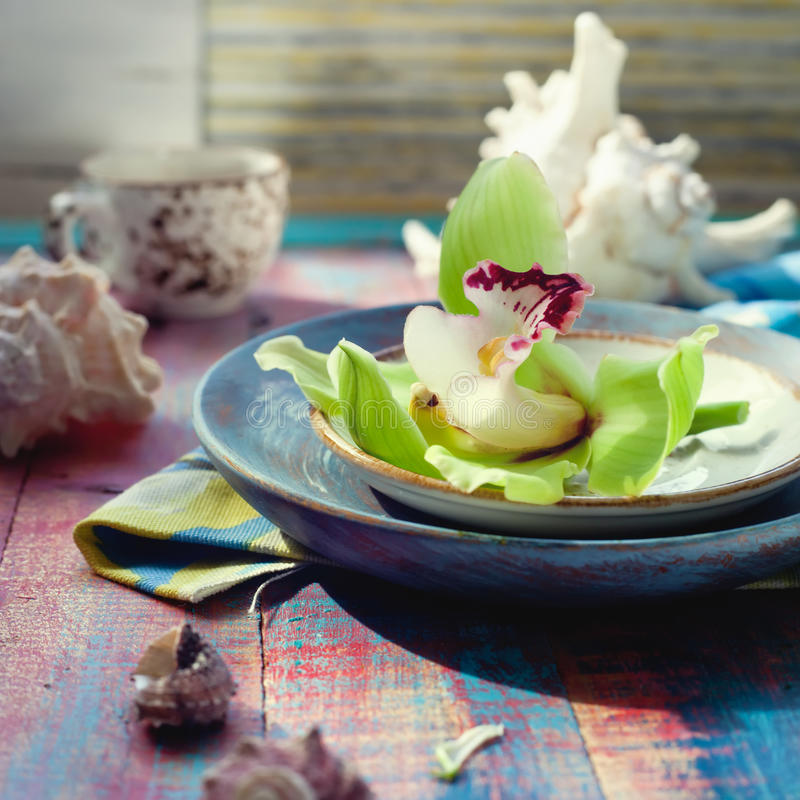 Les coquilles de mer et une orchidée verte fleurissent, de belles décorations images stock