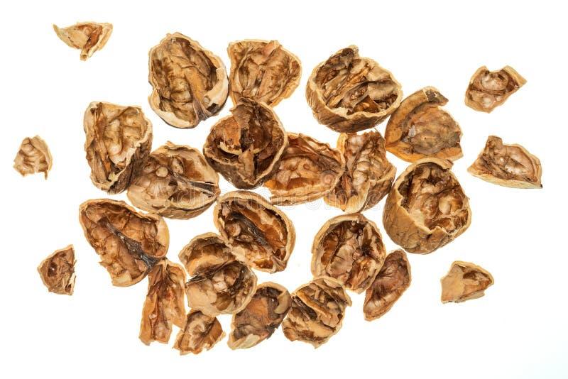 Les coquilles de noix s'ouvrent, chute cassée image libre de droits