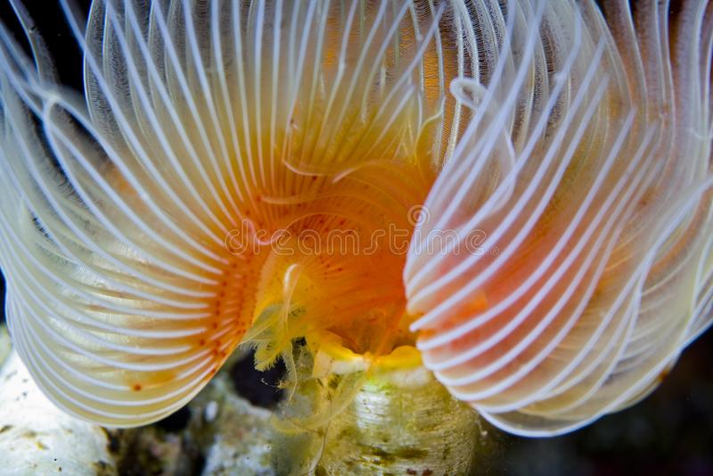Les coraux colorés des îles Maldives Il s'agit de zones cachées par les poissons images libres de droits