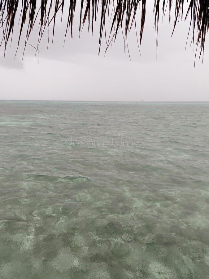 Les coraux océaniques images stock