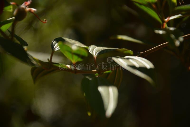 Les cordes de vert photographie stock