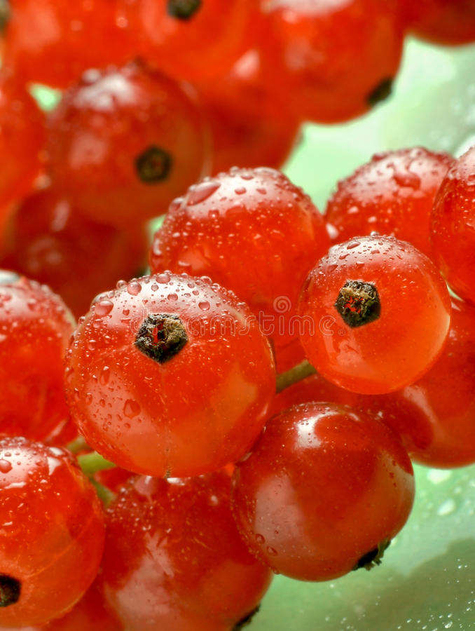 les corinthes de fond verdissent les waterdrops rouges photographie stock