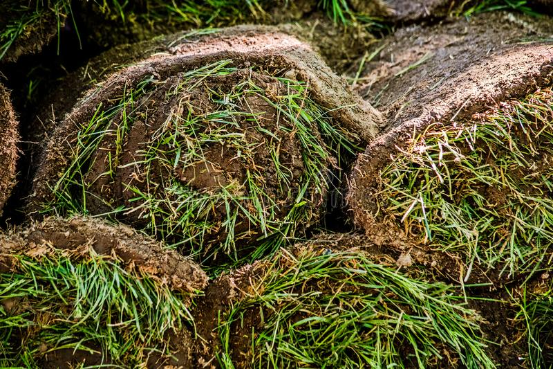 Les couches de pelouse est étroite photographie stock libre de droits