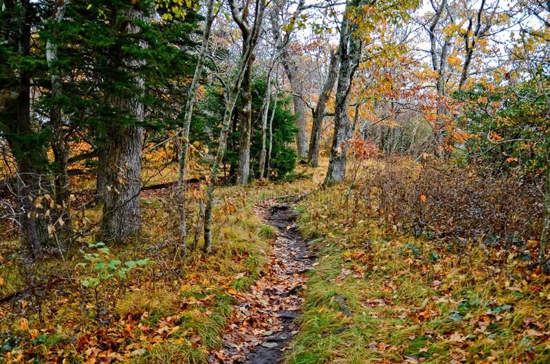 Les couleurs d'automne dans la forêt sur un sentier de randonnée photo stock