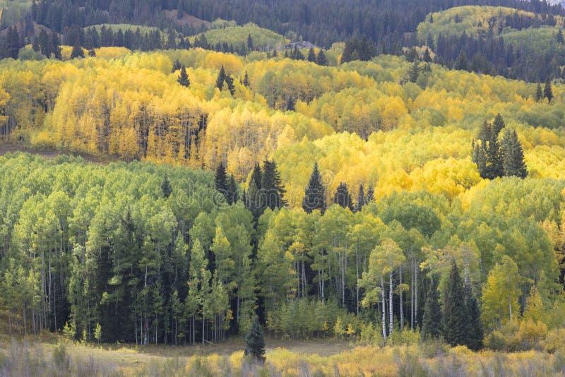 Les couleurs d'automne de chute dans Kebler passent, le Colorado Amérique dans Autumn Fall photos libres de droits