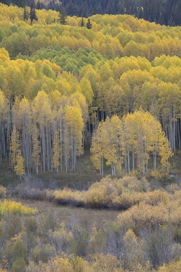 Les couleurs d'automne de chute dans Kebler passent, près de la ville de la butte crêtée, le Colorado Amérique photos libres de droits
