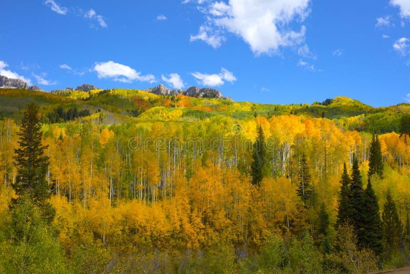 Les couleurs d'Autumn Fall des vergers d'Aspen dans des feuilles de tremble du Colorado de passage de Kebler tournent jaune-orang images libres de droits