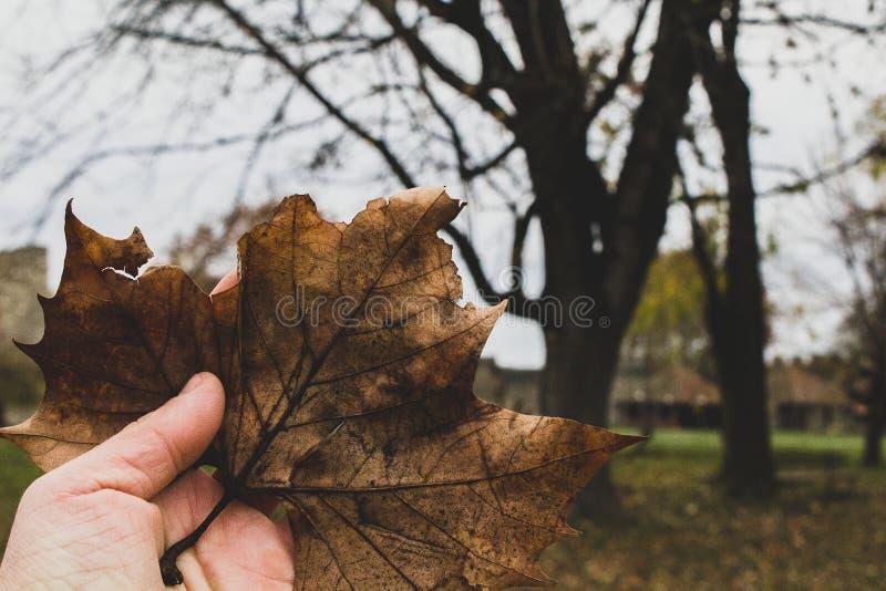 Les couleurs de l'automne photo libre de droits