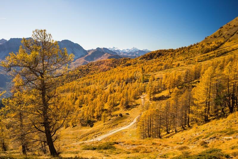 Les couleurs de l'automne dans les Alpes image libre de droits