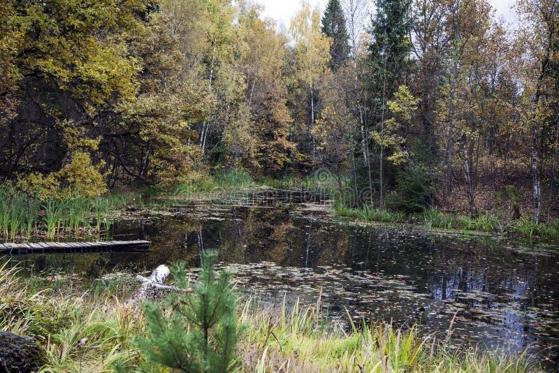 Les couleurs de l'automne en Russie photographie stock libre de droits