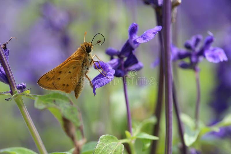 Les couleurs de la pollinisation images stock
