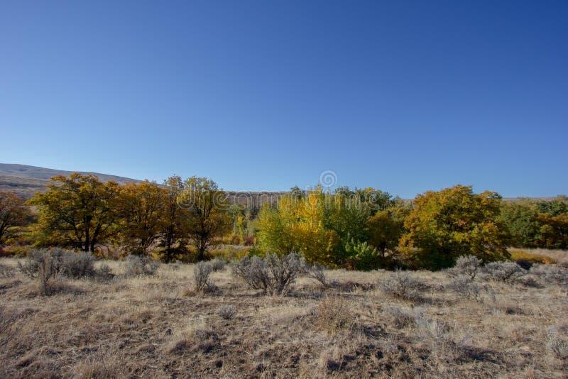 Les couleurs du contraste d'automne avec le champ de l'herbe sèche et du ciel bleu image libre de droits