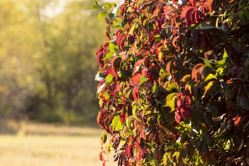 Les couleurs lumineuses de l'automne se garent, détente et balade signicative photos libres de droits